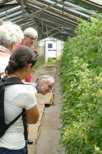 Slow Food Besuch in der Gemeinschaftsgärtnerei