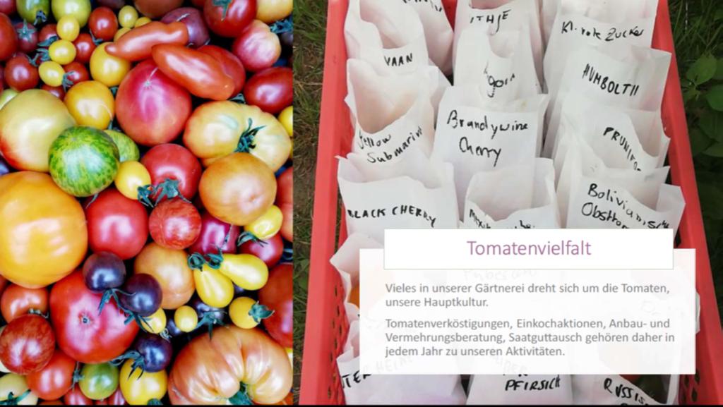 Dieses Bild hat ein leeres Alt-Attribut. Der Dateiname ist Tomatenvielfalt-1024x577.png