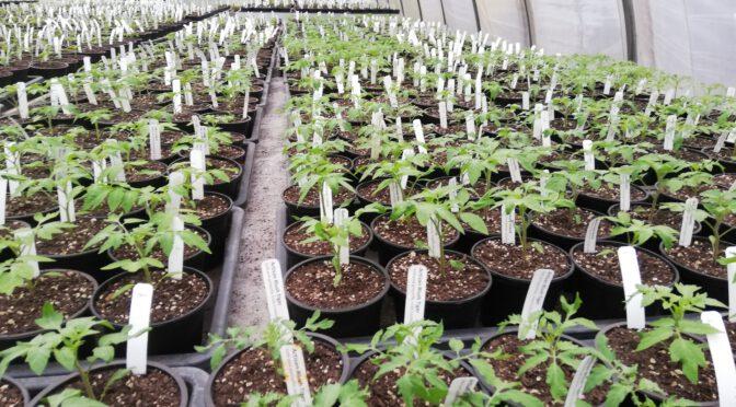 Verkaufstage für Jungpflanzen